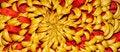 Free Chrysanthemum Stock Image - 17733531