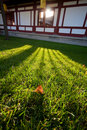 Free Leaf Shining In The Sun Royalty Free Stock Image - 17735616