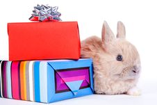 Free Brown Rabbit And Christmas Boxes, Isolated Royalty Free Stock Photography - 17730397
