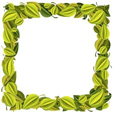 Frame Of Green And Yellow Leaves Royalty Free Stock Photography