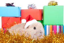 Free Brown Rabbit And Christmas Boxes, Isolated Royalty Free Stock Photos - 17730868