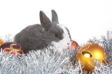 Free Gray Rabbit And Christmas Decoration, Isolated Royalty Free Stock Photos - 17730928
