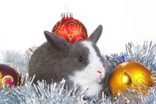 Free Gray Rabbit And Christmas Decoration, Isolated Stock Image - 17730991