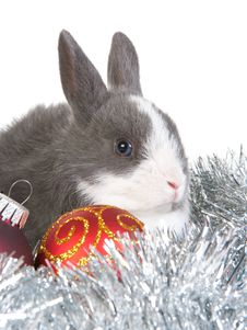 Free Gray Rabbit And Christmas Decoration, Isolated Royalty Free Stock Photos - 17731008