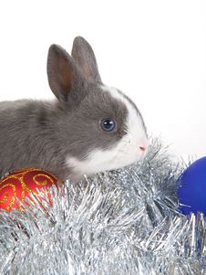 Free Gray Rabbit And Christmas Decoration, Isolated Stock Photos - 17731043