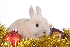 Free Brown Rabbit And Christmas Decoration, Isolated Stock Photos - 17731103