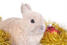 Free Brown Rabbit And Christmas Decoration, Isolated Royalty Free Stock Image - 17731146