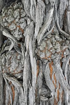 Free Bark With Burr Stock Image - 17732041