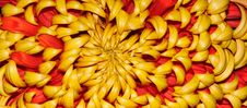 Free Chrysanthemum Stock Image - 17733531