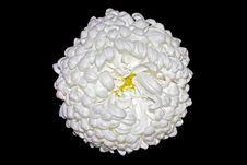 Free Chrysanthemum Royalty Free Stock Photos - 17733538