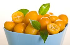 Free Kumquat Stock Photo - 17733890
