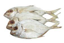Free Fresh Fish Stock Photography - 17734152