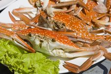 Free Crab Stock Photos - 17735993