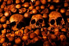 Human Skulls And Other Bones Stock Image