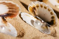 Free Pearls In The Seashells Stock Photography - 17738992