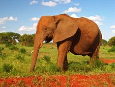 Red Elephant Profile Royalty Free Stock Photography