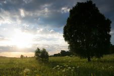 Free Lonely Tree In The Meadow Stock Photo - 17739850