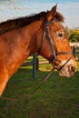 Free Brown Horse Stock Photos - 17745963