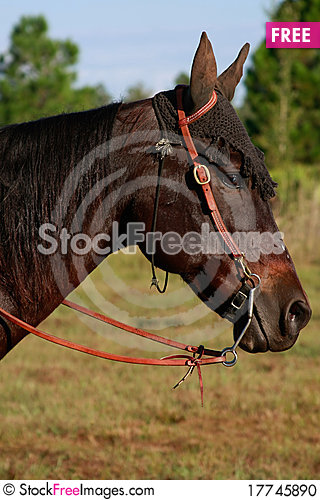 Free Brown Horse With Hat Stock Photo - 17745890