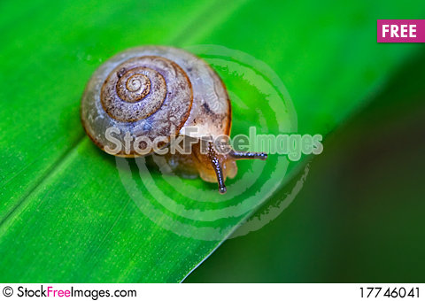 Free Snail On Leaf Stock Image - 17746041