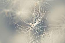 Free White Feather Stock Image - 17741061