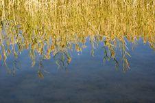 Free Quiet Autumn Lake Royalty Free Stock Photo - 17742935