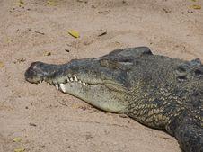Crocodile On Sand
