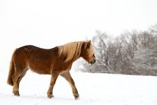 Free Horse In Snow Stock Image - 17744561