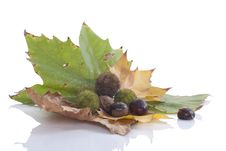 Free Autumn Leaves And Chestnuts Stock Images - 17744834