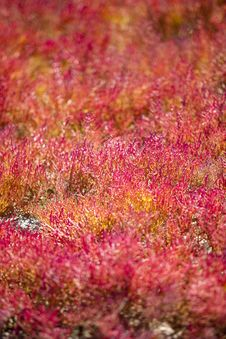 Free Red Vegetation Stock Photos - 17745633