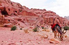 Donkey Near Amphitheatre In Petra, Jordan Stock Photos