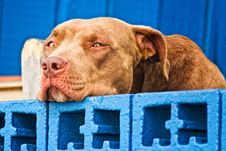 Free Sad Dog Royalty Free Stock Photography - 17746077