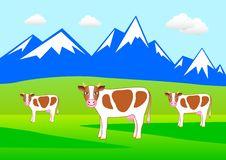 Free Three Cows Stock Image - 17746461