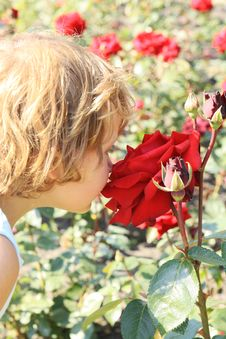 Girl Smelling A Large Red Rose Stock Photos