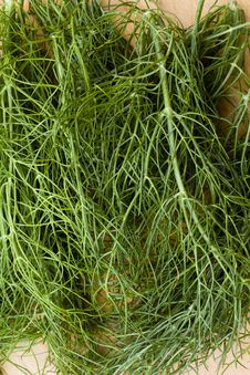 Free Aniseed Flavored Fennel Herb Royalty Free Stock Image - 17747106