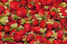 Free Fresh Strawberry Royalty Free Stock Photography - 17748527
