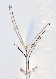 Free Ice Covered Tree Branch Royalty Free Stock Photo - 17748615