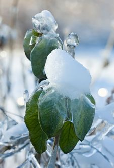 Free The Frozen Water On Green Leaves Royalty Free Stock Photo - 17748955