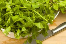Free Fresh Green Celery Leaves Royalty Free Stock Photography - 17748957