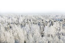 Free Snow-covered Forest Royalty Free Stock Photography - 17749987