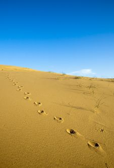 Free Footprints On The Desert Stock Photography - 17751142