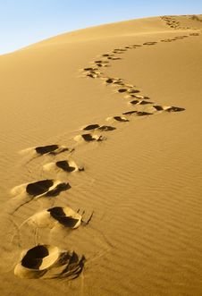 Free Footprints On The Desert Stock Images - 17752234