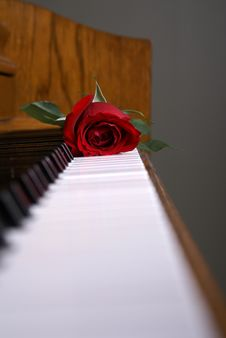 Piano Rose On Keys Royalty Free Stock Image