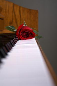 Free Piano Rose On Keys Royalty Free Stock Image - 17752976