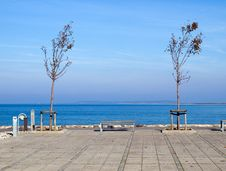 Free Young New Trees By The Ocean Stock Photos - 17753163