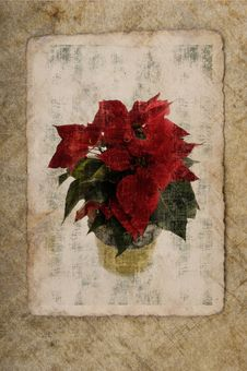 Free Grungy Wallpaper With A Christmas Star Stock Photography - 17753312