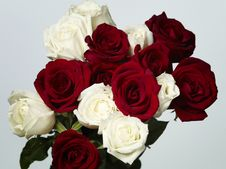 Free White And Red Roses Stock Images - 17753864