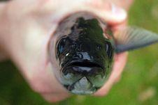 Free Fish Stock Photos - 17755313