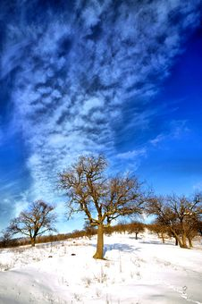 Free Winter Trees Stock Photos - 17756043