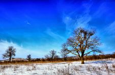 Free Winter Trees Royalty Free Stock Photography - 17756167